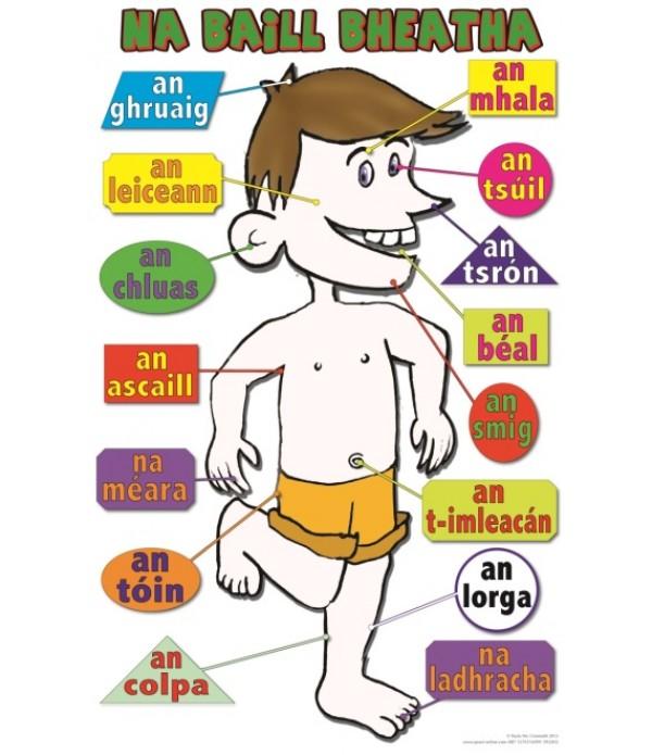 Poster Irish Body 2